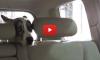 2015.10.23-DogCarWash