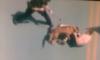 dog_001