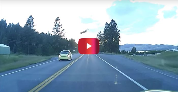 This Deer Caught Some Serious Air When It Got Nailed by a VW Beetle
