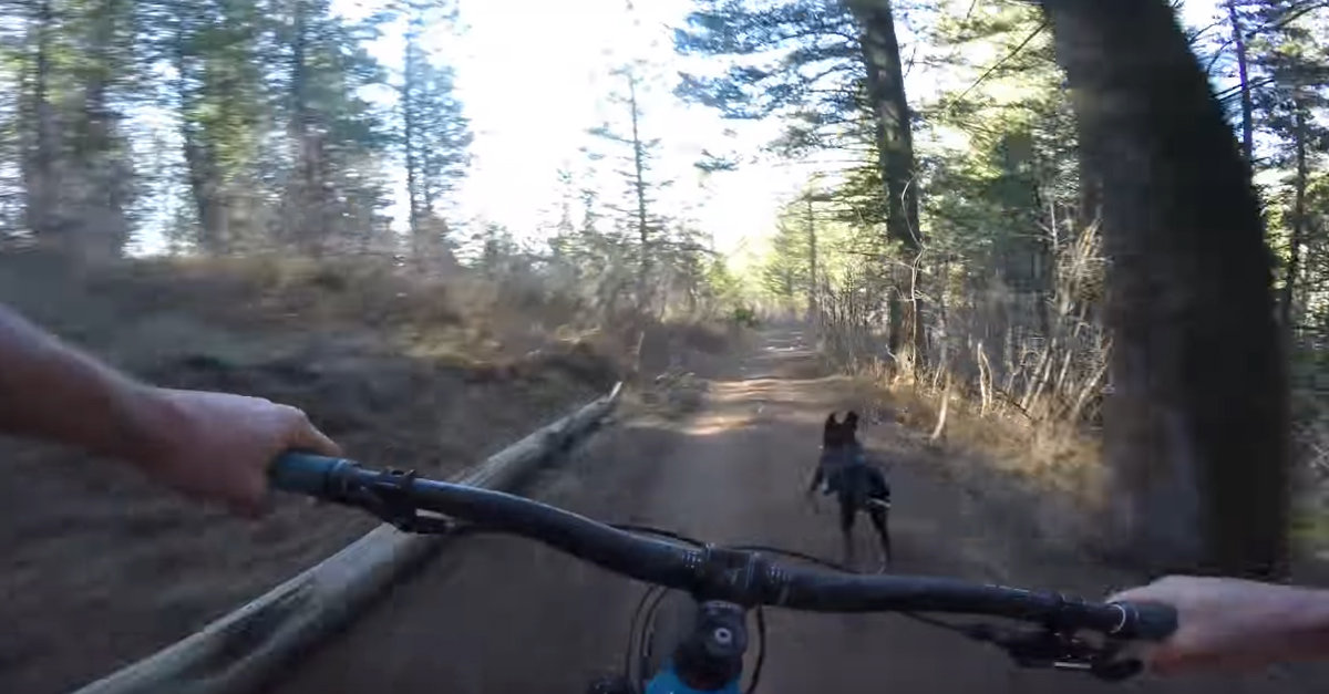 [VIDEO] Mountain Biker Races His Dog In Hilarious Downhill Run