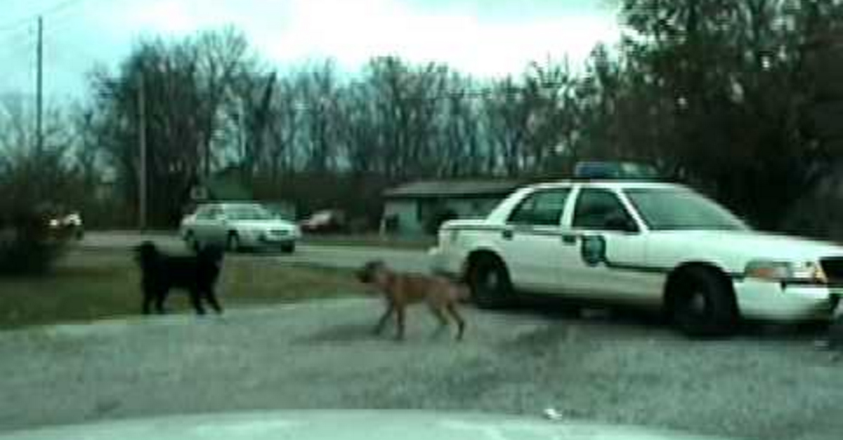 Dogs rip apart a cop cruiser front end