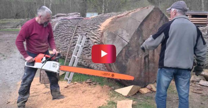 Stihl Chainsaw Dominates Massive Oak Log