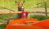 donkey chews on McLaren Spider
