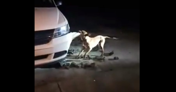 Georgia Woman Says She Got Death Threats After Video of Pit Bull Destroying Car Went Viral