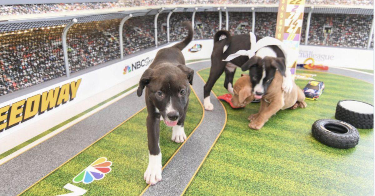 NASCAR Pup Series
