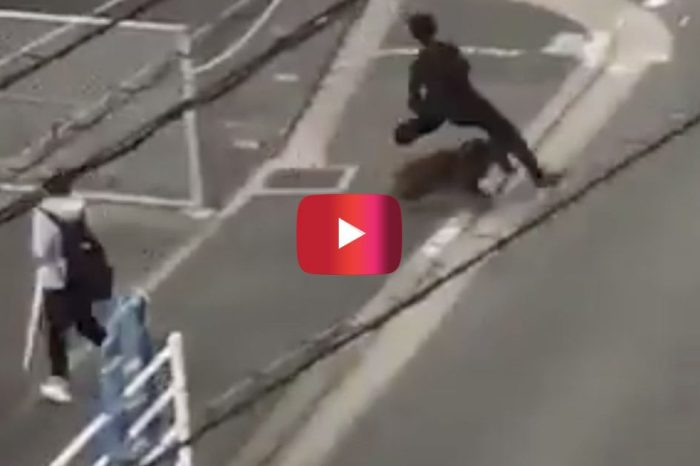 Video Shows Man Get Absolutely Steamrolled by Wild Boar in China