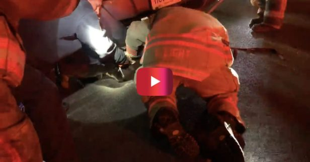 Incredible Footage Shows Rescue of Deer Trapped Under Utility Van