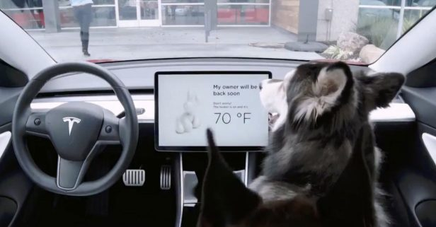 Tesla's New 'Dog Mode' Could Save Your Fluffy Buddy's Life (Despite the Price)
