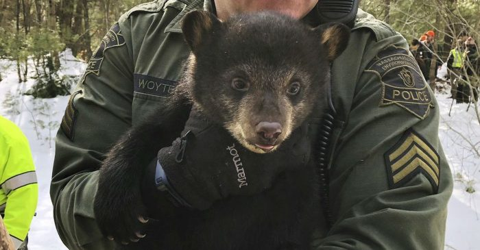 This Bear Family Was Just Found Living Under a Massachusetts Highway