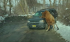 bull attacks woman