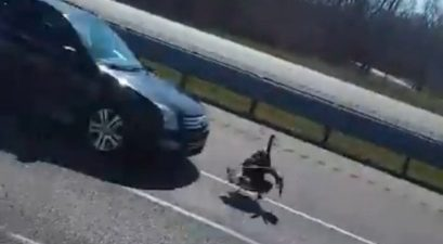 turkey hit by ford focus