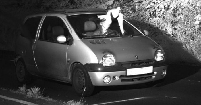 A Speeding Driver Got Away Scot-Free Thanks to This Passing Pigeon