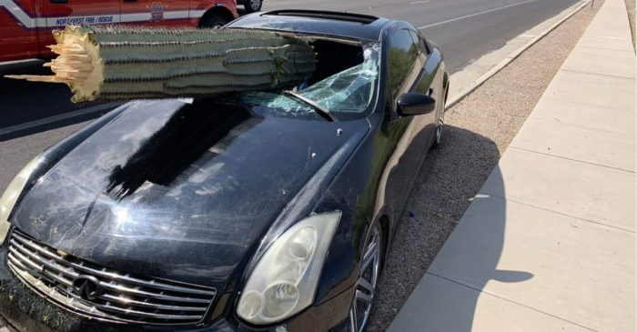 Driver's Wild Ride Ends with a Cactus Through the Windshield