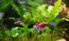 Florida Couple Mugshots