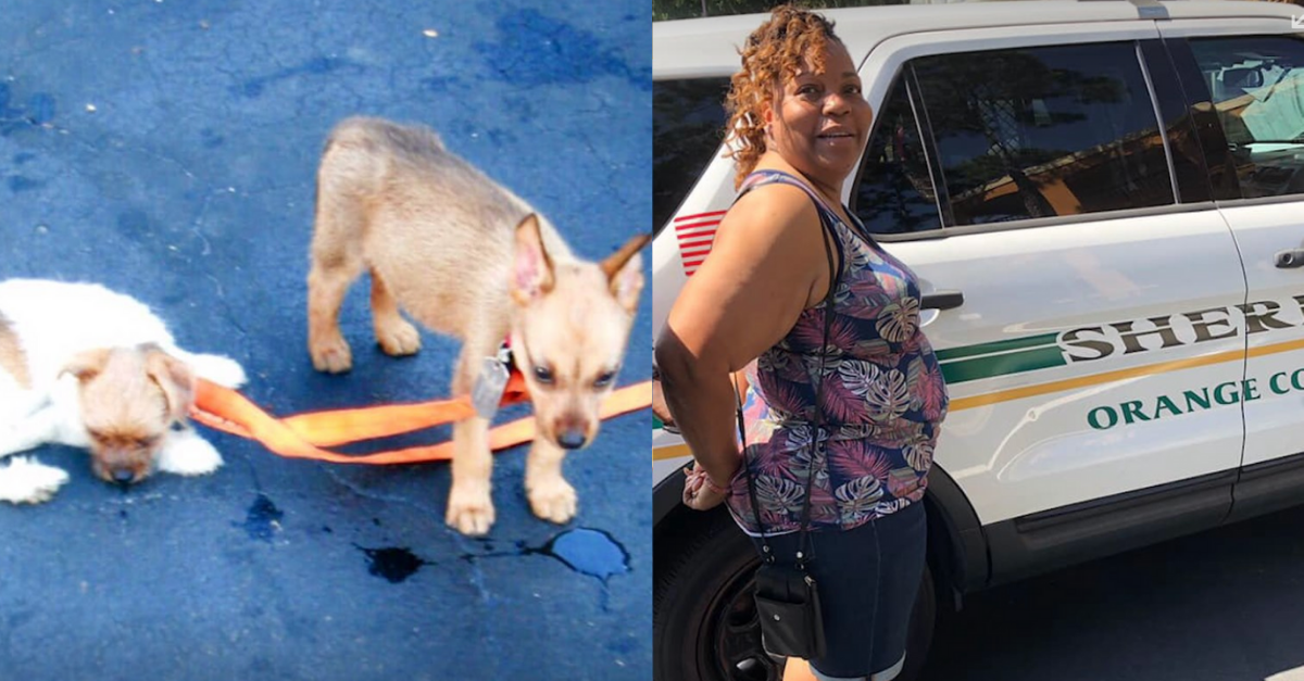 Mississippi Woman Charged with Animal Cruelty After Leaving Puppies in Hot SUV