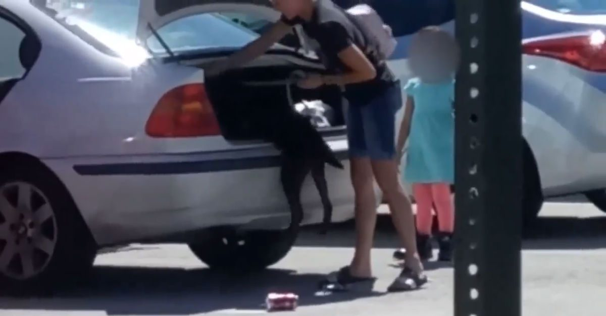 Shocking Surveillance Footage Shows Florida Woman Stuffing Dog in Car Trunk