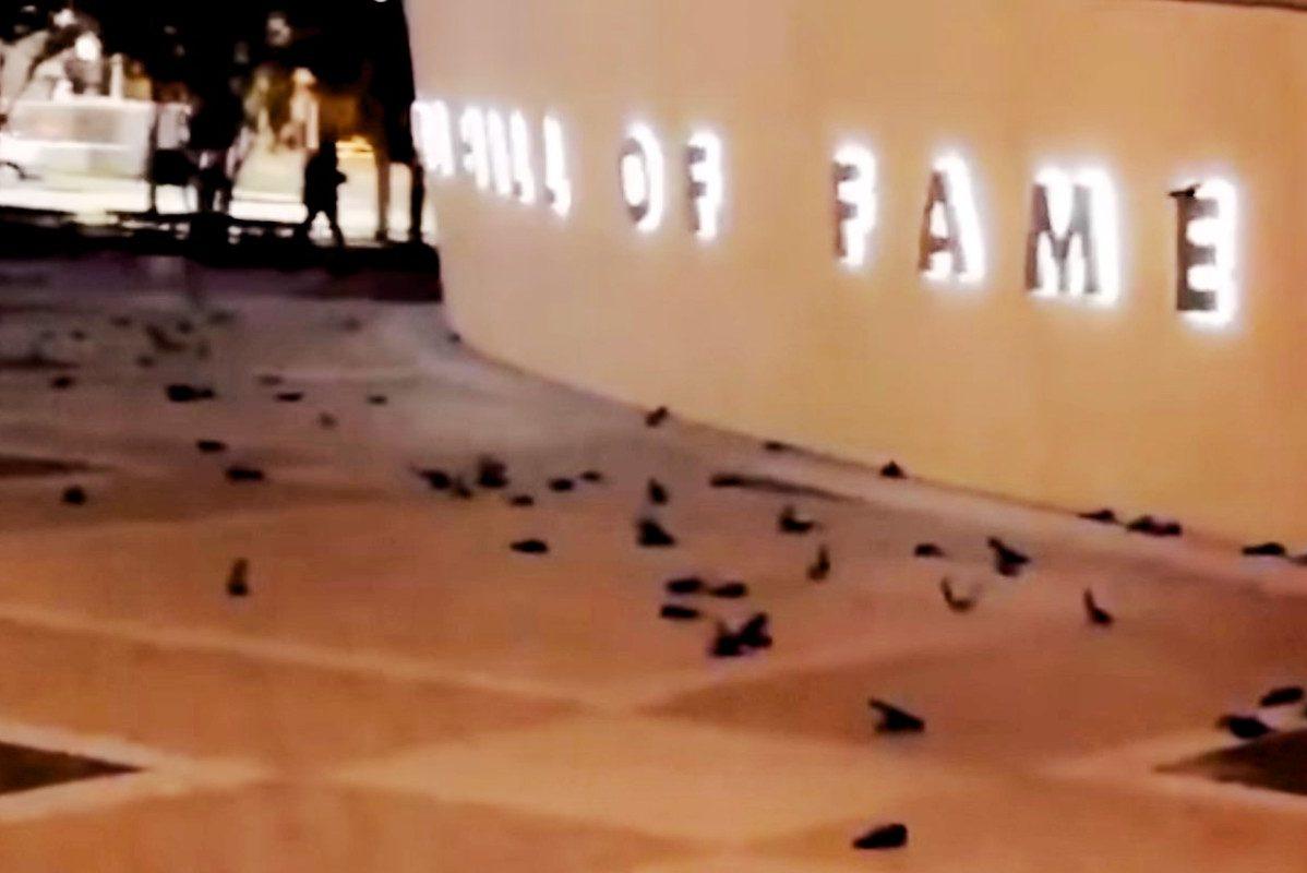 birds nascar hall of fame