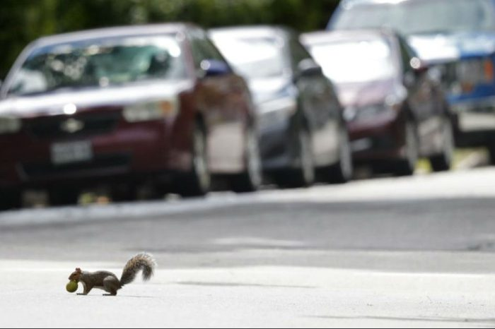 Squirrels Leave NUTTY Surprise Inside Hood of Pennsylvania Couple's SUV