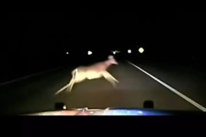 Sheriff's Deputy Hits Deer at 114 MPH