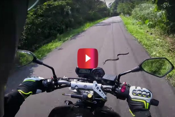 """""""I Ruined His Day,"""" Says Biker After Running Over Snake"""