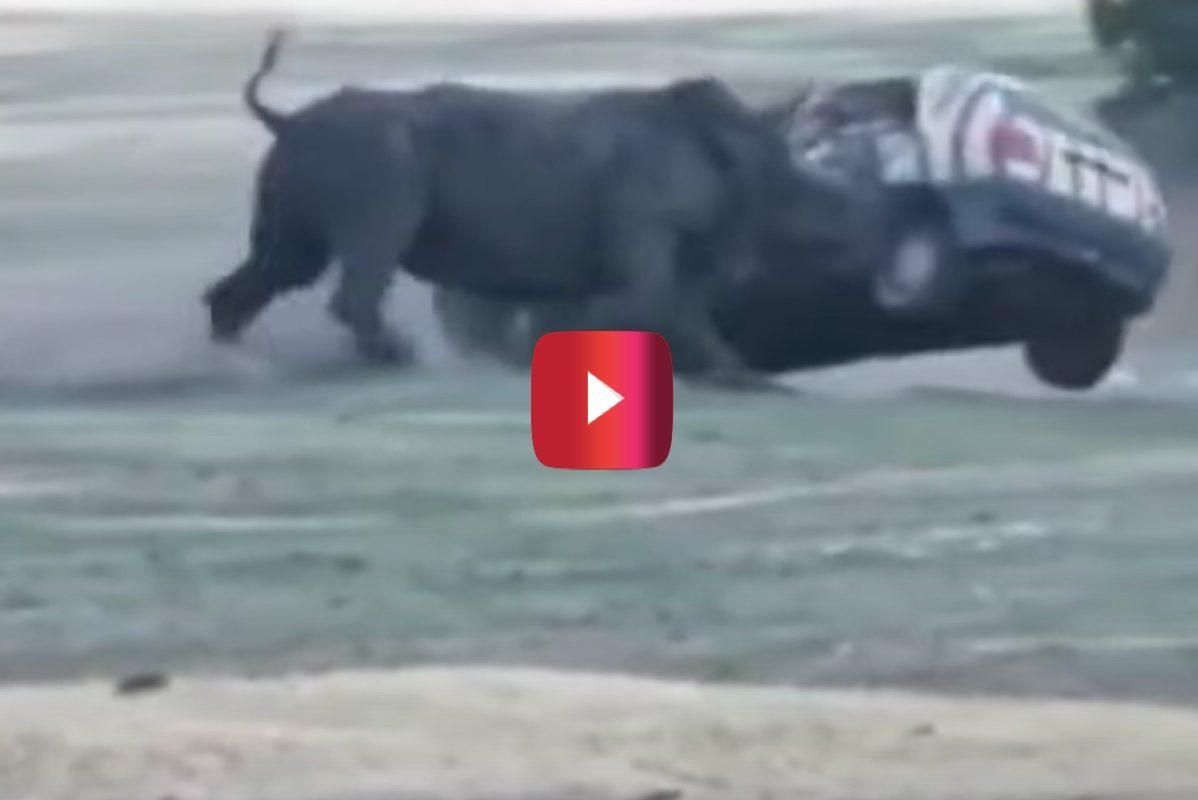rhino flips car