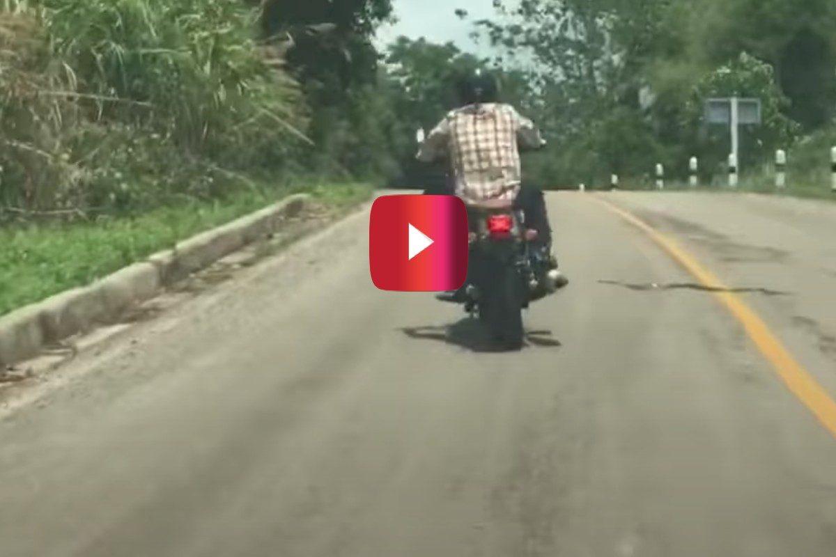 snake vs. motorcyclist