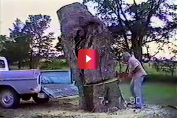 Man Saws Tree Into Truck Bed, but Goofs Big Time
