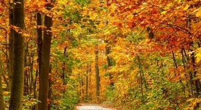 fall colors road trip