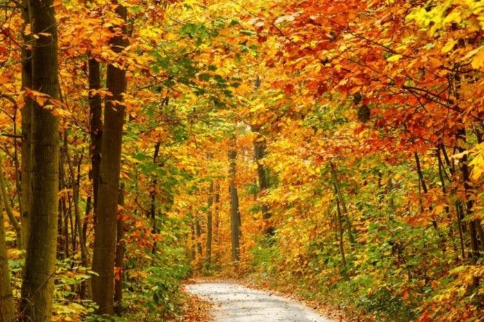 The 10 Best Places to Go for a Fall Foliage Road Trip