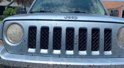 love bugs on jeep