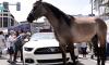 horse next to car