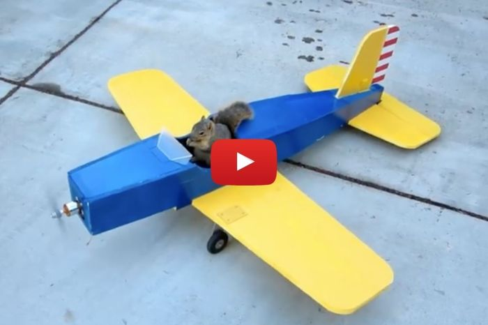 """""""Hold My Acorn"""": Sneaky Squirrel """"Steals"""" Airplane From Hobbyist"""