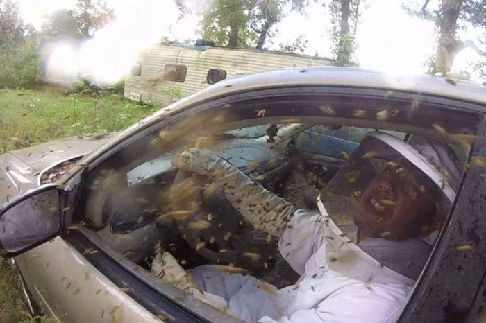 The Interior of This Chevy Malibu Turns Into One Giant Wasp Nest