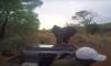 elephant attacks film crew