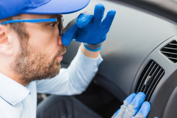 How to Remove a Dead Animal (and Its Terrible Smell) From Your Car
