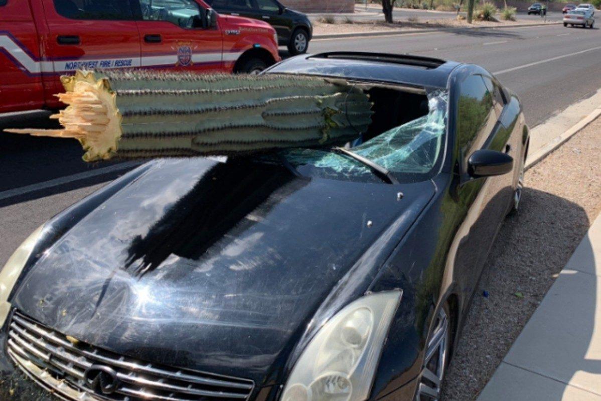 cactus crashes through windshield