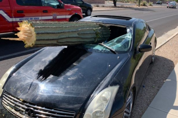 Driver Is Miraculously Unharmed After Cactus Crashes Through His Car Windshield