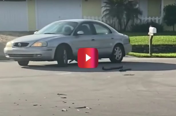 Dog Accidentally Puts Car in Reverse and Drives in Circles for an Hour